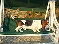 Basset-hound DomTom.jpg