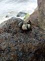 Beauty of snail.jpg