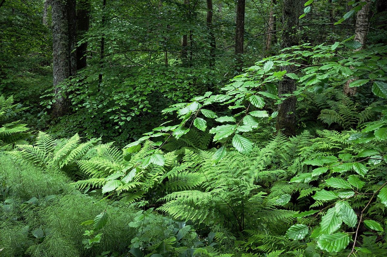 Resultado de imagen para bosques templados fauna