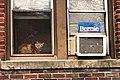 Bernie Cat (49653989846).jpg