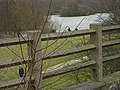 Bestwood Country Park- Mill Lakes - geograph.org.uk - 661620.jpg