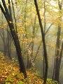 Big Pocono State Park Indistinct.jpg