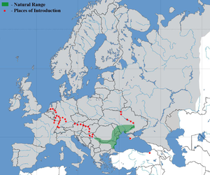Ponticola kessleri - Image: Bighead goby map