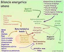 Fabbisogno energetico umano