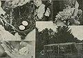 Bird notes (1908) (14562096757).jpg
