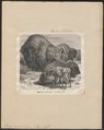 Bison americanus - 1700-1880 - Print - Iconographia Zoologica - Special Collections University of Amsterdam - UBA01 IZ21200231.tif