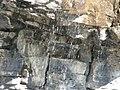 Black Swift nest with egg, Glacier NP, July 5, 2012 (7515295880).jpg