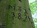 Bleibende Spuren (37864460).jpeg