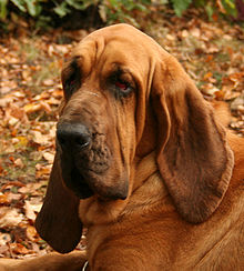 Image Result For Can Dogs Smell
