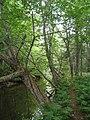Bloomfield Provincial Park IMG 8221 (1849030868).jpg