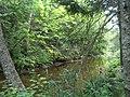 Bloomfield Provincial Park IMG 8260 (1848228569).jpg
