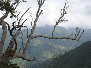 Blue Mountains (Jamaica) mountain range in Jamaica