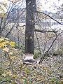 Bobry nad jeziorem Kukowino - panoramio.jpg