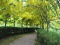 Bodenham Arboretum, Worcestershire - geograph.org.uk - 1201567.jpg