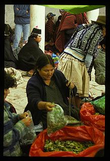 Coca in Bolivia