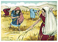 Book of Ruth Chapter 2-11 (Bible Illustrations by Sweet Media).jpg