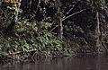 Borneo1981-026.jpg