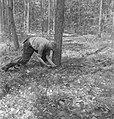 Bosbewerking, arbeiders, boomstammen, werkzaamheden, zagen, Bestanddeelnr 251-8481.jpg