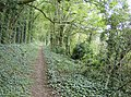 Bridleway below Shalcombe Down - geograph.org.uk - 582059.jpg