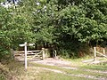 Bridleway junction at the southern edge of Roydon Woods, New Forest - geograph.org.uk - 60476.jpg