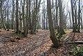 Bridleway through Green Wood - geograph.org.uk - 1252938.jpg