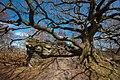 Brimham Rocks IMG 4922 - panoramio.jpg