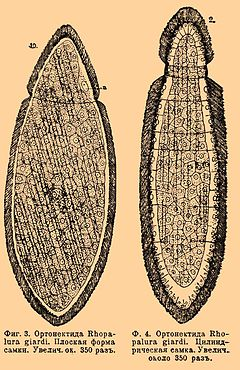 Brockhaus and Efron Encyclopedic Dictionary b43 191-2.jpg