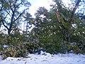 Buffalo snow storm19.jpg