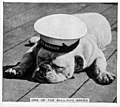 Bulldog godfrey card.jpg