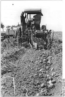 Bundesarchiv Bild 183-21262-0001, Klein-Oschersleben, Kartoffelernte.jpg