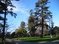 Burlingame washington park1.JPG