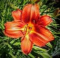 Butchart Gardens - Victoria, British Columbia, Canada (29147651996).jpg