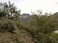 Butcher Jones Trail - Mt. Pinter Loop Trail, Saguaro Lake - panoramio (93).jpg