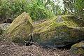 Butte aux Gorzeaux - Sépultures méglithiques - 2.jpg