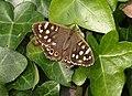 Butterfly, Stantaway Park, Torquay - geograph.org.uk - 2085960.jpg