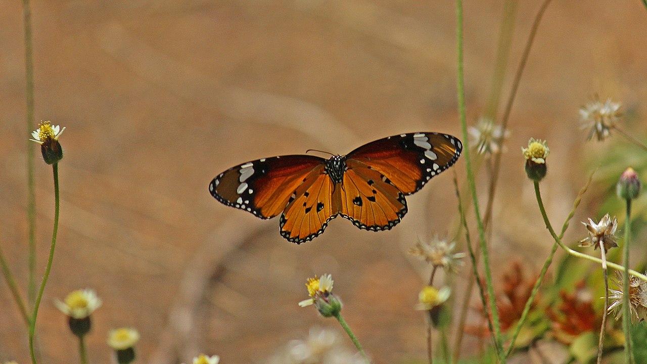 Weevils: Bahçe zararlıları ile nasıl başa çıkılır 77
