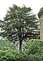 Cáceres, árboles 1975 10.jpg