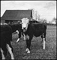 CH-NB - USA, Gruetli-TN- Farm - Annemarie Schwarzenbach - SLA-Schwarzenbach-A-5-10-145.jpg