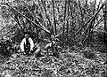COLLECTIE TROPENMUSEUM Man poseert bij megalieten op Zuid-Sumatra TMnr 10025696.jpg