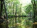 Cache River in Woodruff County, AR 001.jpg