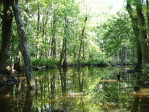 Cache River in Woodruff County, AR 001.jpg