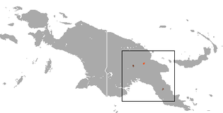Calabys pademelon species of mammal