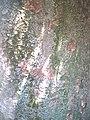 Camellia Bark.jpg