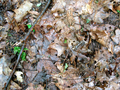 Camouflaged toad (5797901820).png