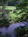 Cample Water and cow field - geograph.org.uk - 1390027.jpg