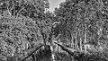 Canal du Midi, Villeneuve-lès-Béziers BW.jpg