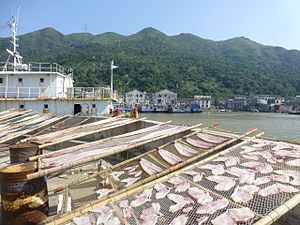Fishing industry in China - Fish being dried dockside at Pacao Harbor, Cangnan County, Zhejiang