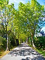 Carretera entre Darnius i Maçanet de Cabrenys - panoramio.jpg
