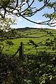 Castlewellan countryside, May 2010 (06).JPG