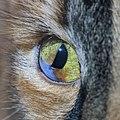 Cat Eye with Synechia.jpg